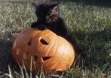 pumpkin and kitten copy